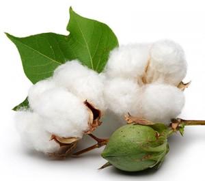unbleached-cotton